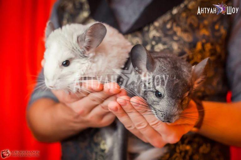 Шоу с животными для самых маленьких